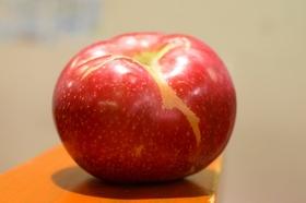 旭 リンゴ