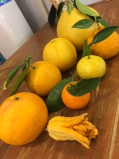 柑橘いろいろ