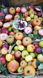 リンゴ色々.JPG
