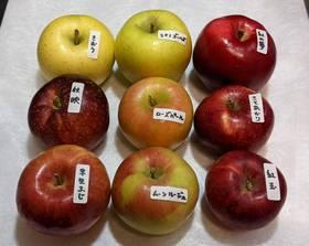 10月31日リンゴ